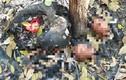Hé lộ chi tiết kinh hoàng trong vụ phát hiện 9 bộ xương người ở Tây Ninh