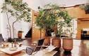 4 vị trí nên đặt cây xanh trong nhà, càng tốt tươi càng vượng vận