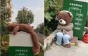 Bị vứt ra thùng rác, chú gấu bông bỗng nổi tiếng MXH vì điều này