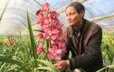 Hoa xuất xứ Trung Quốc gắn mác hoa Tết Đà Lạt