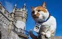 Những chú mèo trở thành tâm điểm trong các sự kiện trên thế giới