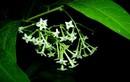 Vì sao một số loài hoa chỉ tỏa hương vào ban đêm?