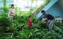 Nhà thành vườn, trí thức thành nông dân