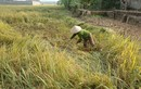 Thương nông dân