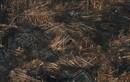 Sự tàn phá vụ cháy rừng Amazon nhìn từ trên cao