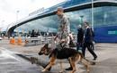 Moscow kiểm tra toàn bộ 4 sân bay vì đe dọa đánh bom