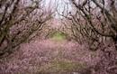 Cảnh sắc mùa xuân rực rỡ khắp thế giới