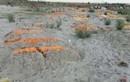 Ấn Độ phát hiện nhiều thi thể chôn vùi dưới cát ở sông Hằng
