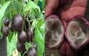 Loạt vụ trẻ ngộ độc, nhập viện vì ăn quả hồng châu