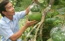 """Bưởi hồ lô Việt """"so găng"""" trái cây tạo hình Trung Quốc"""