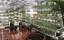 Vũ Thu Phương khoe vườn rau sạch trên sân thượng