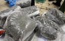 Ảnh: Đường đi của 2,5 tấn ma túy lá Khat cực độc