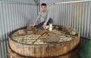 Kỹ sư vận tải bỏ công việc nghìn đô về quê làm nước mắm