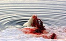 Rợn người với bữa tiệc đẫm máu của gấu Bắc cực