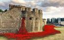 Choáng ngợp cảnh hoa anh túc đỏ vây kín lâu đài