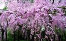 Rắn độc kỵ những loài cây nào?