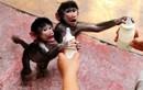 Ảnh động vật đẹp tuần qua: Khỉ con với bình sữa