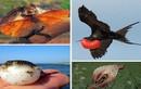 Kỳ thú xem các loài động vật siêu co giãn
