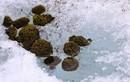Kỳ thú xem đá lăn vẫn mọc rêu xanh tốt