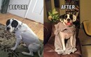 Mê đắm ảnh thú cưng trước và sau khi được nhận nuôi