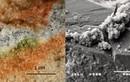 Nấm Nam Cực chứng minh sự sống trên hành tinh Đỏ