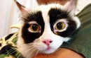 """Mê mệt những chú mèo có bộ lông """"độc nhất vô nhị"""""""