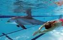 Cá heo robot như thật: Ai bơi gần cũng muốn... lao vào ôm