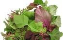 Bài thuốc chữa tiêu chảy cực kỳ đơn giản từ rau dền