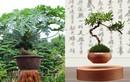 Những kiểu bonsai độc lạ làm nóng thị trường Tết 2017