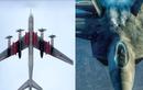 Cách Nga dùng máy bay đời cũ hành hạ F-22 Raptor đắt đỏ Mỹ