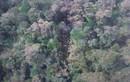 Phát hiện 53 thi thể ở hiện trường máy bay Indonesia rơi