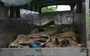 Hơn 1 tấn da trâu, bò hôi thối bị bắt ở Hà Nội