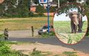 Voi nhà quật chết người: Sở VHTT & DL Đắk Lắk lý giải nguyên nhân