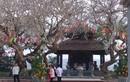 Đầu năm Tân Sửu 2021, đền, chùa vắng tanh vì dịch COVID-19