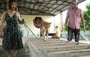 """Phim """"Cậu Vàng"""": Chó thuần Việt sẽ đóng thế chó Nhật cảnh bị ngược đãi?"""
