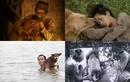 """Chó Shiba đóng """"Cậu Vàng"""" gây tranh cãi, chó ta trên màn ảnh thế nào?"""