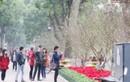 Đào rừng khoe sắc quanh hồ Hoàn Kiếm mừng Tết Nguyên đán