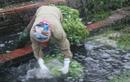 Đường đi của rau bẩn trước khi đến Hà Nội