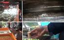 Cận cảnh công nghệ sản xuất táo siêu độc hại ở Hưng Yên