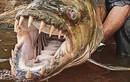 Thú kinh dị của dân chơi Hà Nội: Nuôi thủy quái hổ Congo