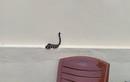 Video: Nhiều rắn hổ mang, cạp nia cực độc xuất hiện trong nhà sau lũ