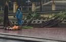 Xúc động cảnh nam sinh bán mía giữa trời mưa gió, dân mạng chỉ có thể an ủi