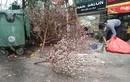 Sau Tết, công nhân vã mồ hôi dọn đào, quất bị vứt đầy đường