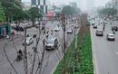 Hàng phong lá đỏ khô héo, xác xơ trên đường Trần Duy Hưng - Hà Nội