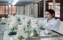 Phú Yên: Nữ Thạc sỹ nghiên cứu thành công mô hình nuôi tảo Spirulina