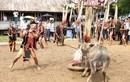 Chỉ đạo nóng vụ bắt dân nghèo đóng tiền tổ chức lễ hội đâm trâu