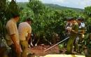 Xử lý như nào nghi can sát hại 3 bà cháu ở Lâm Đồng?