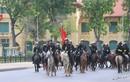 Tướng Tô Lâm: Sẽ sử dụng ngựa trong nước như Bắc Hà trong Kỵ binh