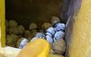 Tro cốt bị bỏ xó ở chùa Kỳ Quang: Không thể giám định DNA?