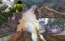 Thủy điện Thượng Nhật tích nước trái phép: Không thể nương tay!